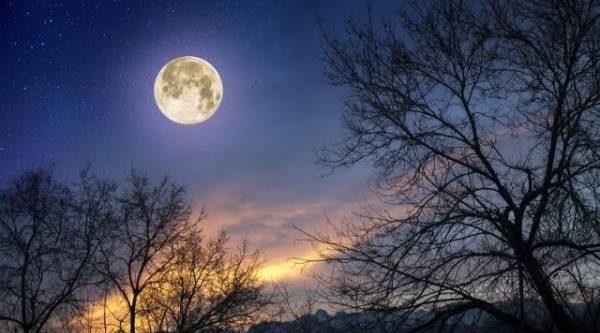 Лунный календарь садовода иогородника с 4 по 31 декабря