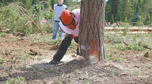 Свалить дерево. Как сделать это безопасно и эффективно?