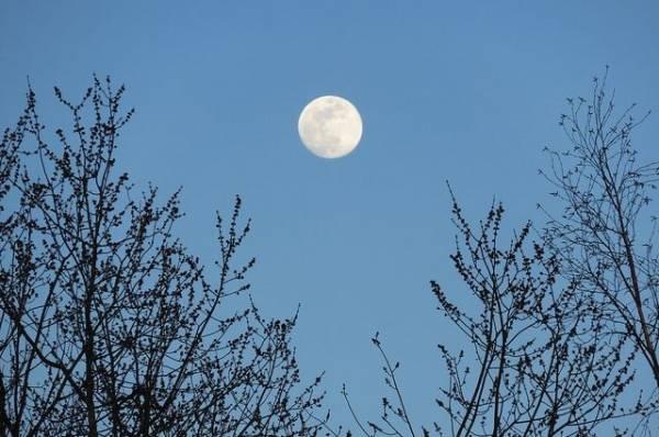 Лунный календарь садовода иогородника с 7 по 26 ноября