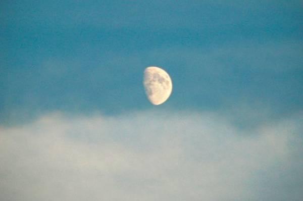 Лунный календарь садовода иогородника с 21 ноября по 9 декабря