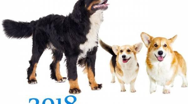 Встречаем Земляную Собаку‑2018!
