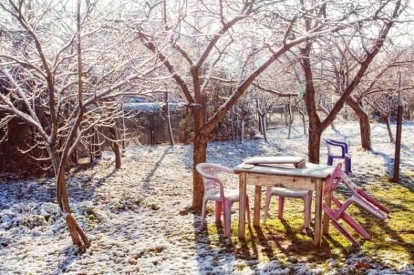 Зимняя броня. Какие материалы помогут защитить деревья от грызунов?