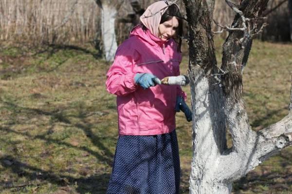 Обрезка ипобелка. Как подготовить деревья кзиме