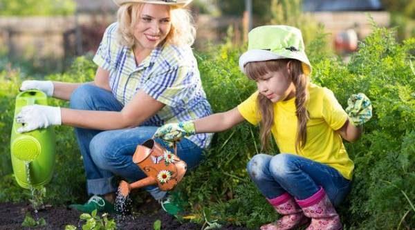 Шпаргалка для дачника. Садовый календарь поможет в уходе за растениями