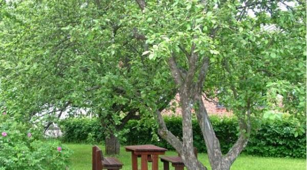 5 образов яблони. Как придать садовому дереву современный, ухоженный вид?