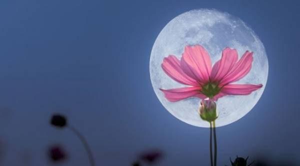 Учимся читать знаки. Как Луна влияет на дачные дела?