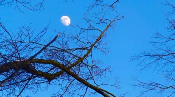 Лунный календарь садовода иогородника с 20 марта по 6 апреля