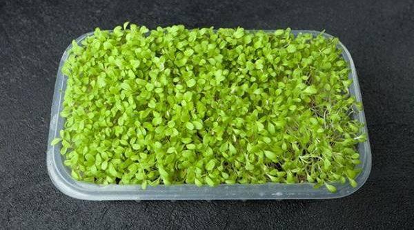 Микрозелень. Что можно вырастить на подоконнике в феврале