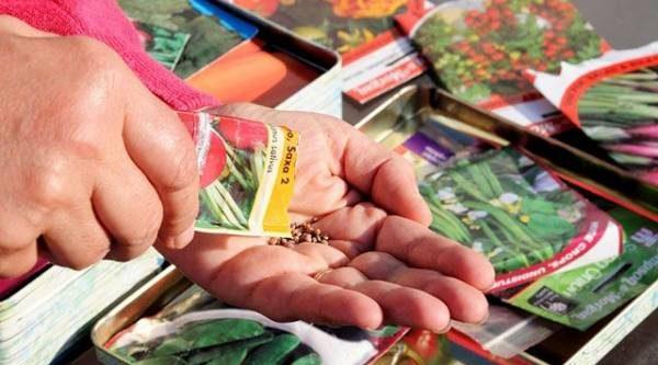Готовимся к посеву овощей. Как выбрать хорошие семена?