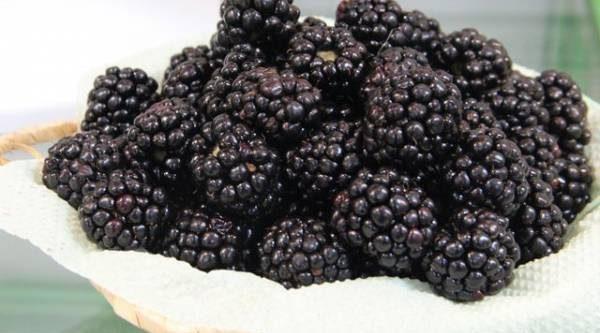 Новинки для сада. Какие плодовые и ягодные можно вырастить в Нечерноземье?