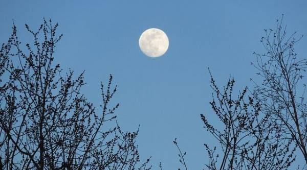 Лунный календарь садовода иогородника с 2 по 20 апреля