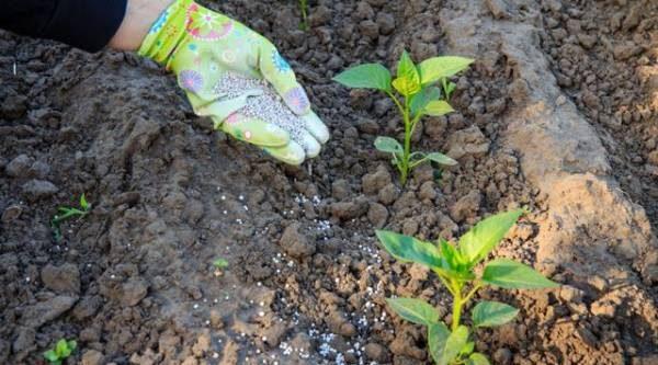 Огородное меню. Какие питательные вещества нужны растениям?
