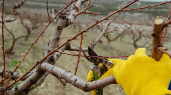 Ухаживаем засадом. Как обрабатывать плодовые растения весной?
