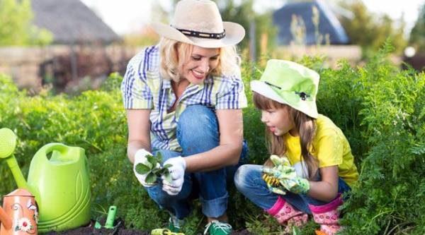 Лунный календарь садовода иогородника с 14 июня по 2 июля
