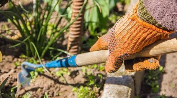 Тяпка, «вилка», или плоскорез? 5 лучших инструментов для прополки