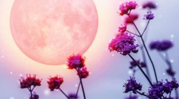 Лунный календарь садовода иогородника с 25 июня по 13 июля