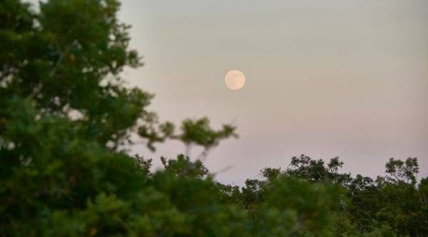 Лунный календарь садовода иогородника с 9 по 27 июля
