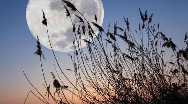Лунный календарь садовода иогородника с 22 июля по 10 августа