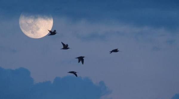 Лунный календарь садовода иогородника с 6 по 23 августа