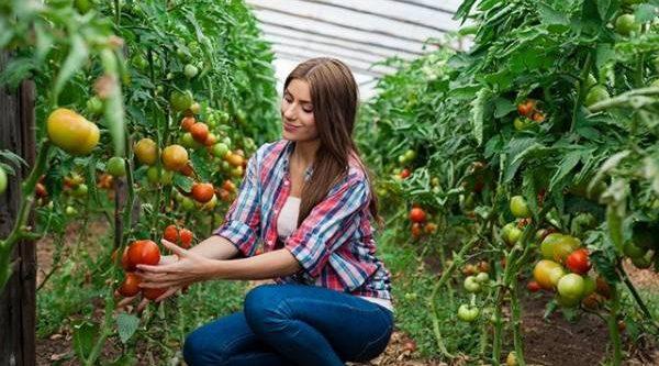 Полить, подкормить, прищипнуть. Как повлиять на урожайность огорода?