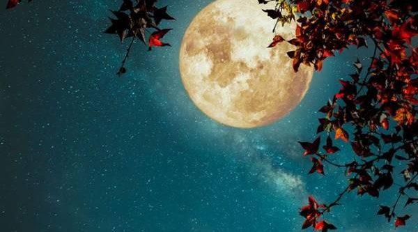 Лунный календарь садовода и огородника с 4 по 22 сентября
