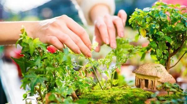 Сады в миниатюре. Создаём зелёный уголок в горшке