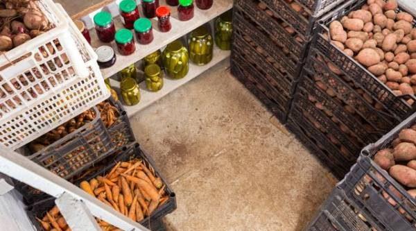 Холод, вентиляция, темнота. Как сохранить урожай картошки, свёклы и капусты