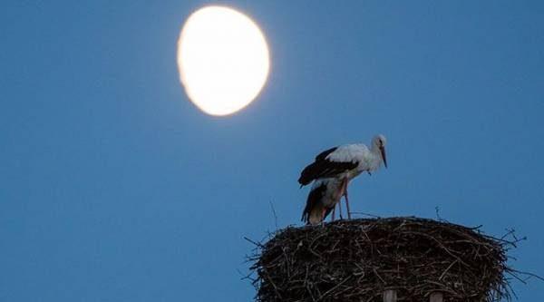 Лунный календарь садовода иогородника с 22 октября по 8 ноября