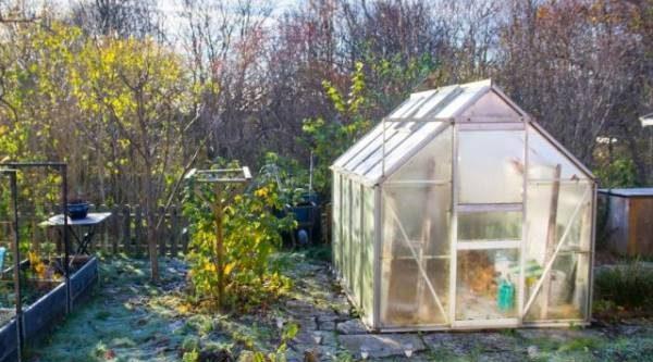 Осенняя уборка втеплице: пошаговая инструкция