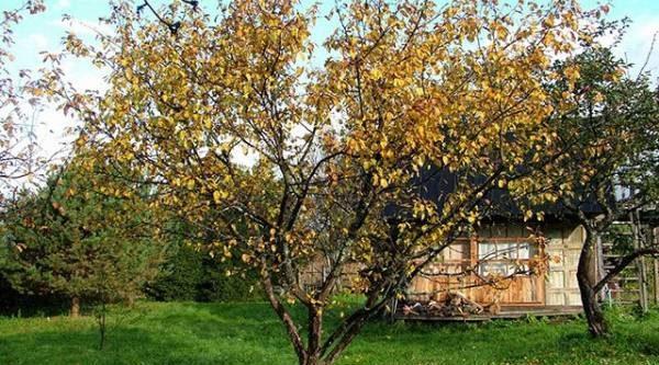 Задачи на осень. Что делать с плодовыми и ягодными культурами