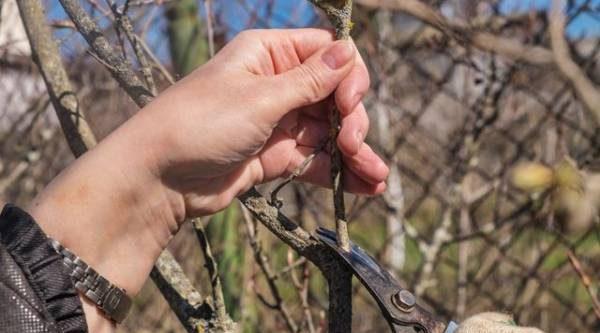 Декоративные деревья и кустарники. Защищаем растения от иссушения и мороза