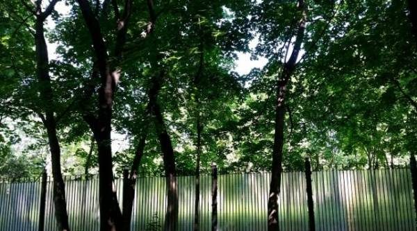 Идеальное решение. Как можно усовершенствовать дачный забор?