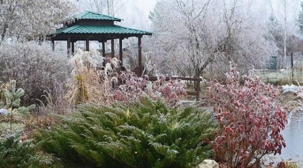 Травы, злаки и кусты. Что украшает сад в ноябре