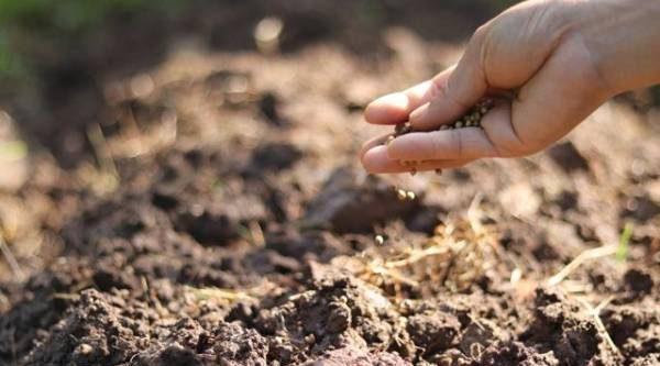 Подзимний посев овощей: за и против