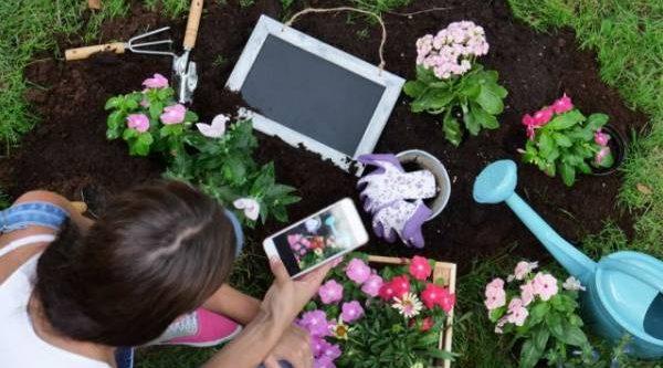 Видеоуроки для дачников. Стоит ли доверять «огородным советам» на YouTube?