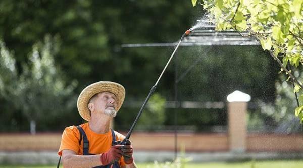 «Дождик» для вредителей. Как защитить сад весной?