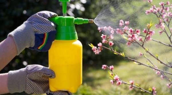 «Химический удар». Можно ли обойтись без пестицидов?