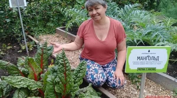 Рапунцель, трип мадам и брунколь. Какие овощи исчезли с наших огородов?