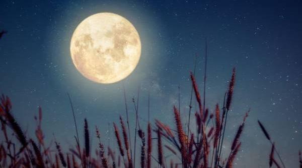 Лунный календарь садовода иогородника с 11 по 25 июня