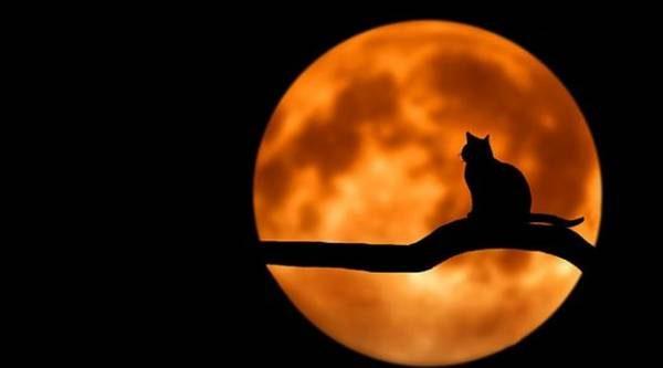 Лунный календарь садовода иогородника с 25 июня по 8 июля