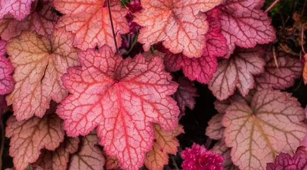 Листва вместо цветов. Чем интересны декоративнолистные растения?