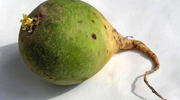 Их корни превратились в плоды. Как улучшить вкус выращиваемых корнеплодов