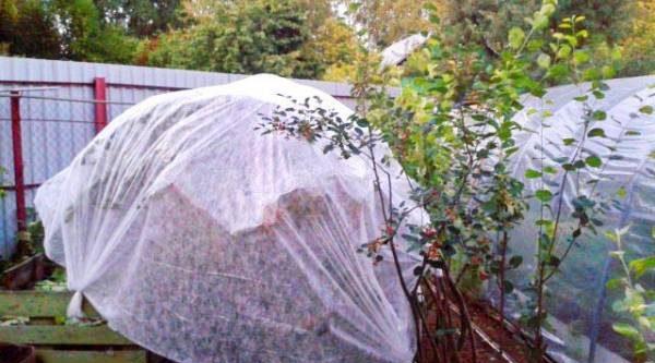 Борьба с пернатыми воришками. Как уберечь урожай фруктов и ягод от птиц