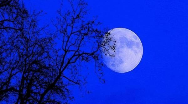 Лунный календарь садовода иогородника с 8 по 22 июля