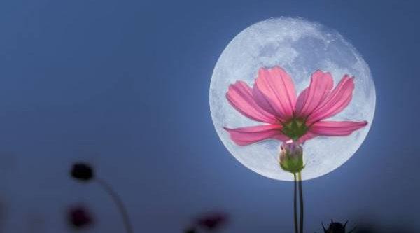 Лунный календарь садовода иогородника с 25 июля по 4 августа