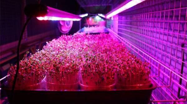 Светодиоды для рассады. Как влияет нарастения искусственное освещение?