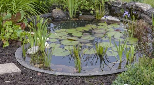 Белокрыльник или нимфа? Выбираем растения для декоративного пруда