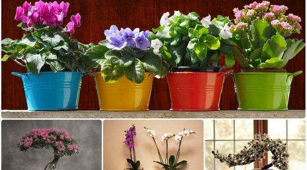 Как правильно выбрать вазоны для растений и цветов